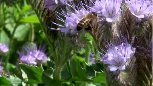 SERVICE USER ACHIEVEMENTS: Service Users Create New Video Documentary on Bees – Bee Aware, Bee Heard